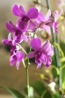 Abris d'ombrage pour les orchidées