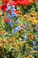 Les meilleurs moments de plantation pour les fleurs