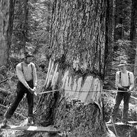 Comment couper un arbre avec une scie à main