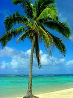 Comment acheter Palm Trees