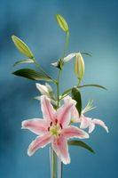 Comment faire Blooms se ouvrent plus rapidement dans un vase