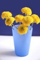 Informations sur la façon de sel prolonge la vie des fleurs coupées