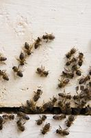 Comment faire pour supprimer Bugs de la maison
