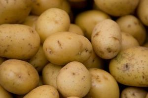 Combien de variétés de pommes de terre sont là?