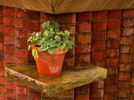 Les plantes Maison vivent plus longtemps en plastique ou des pots en céramique?