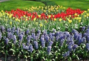 Saisons de plantation pour les fleurs