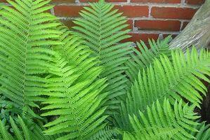 Plantes d'appartement non-toxiques pour les enfants