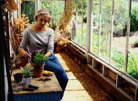 Comment identifier les plantes à fleurs Maison