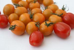 Plantes recommandée pour la culture hydroponique