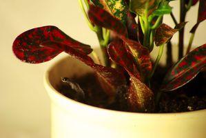 Lutte contre les insectes sur les plantes d'intérieur