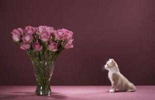 comment faire pour mettre roses dans un vase