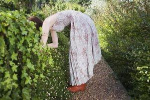 Arbres et arbustes Racine engrais