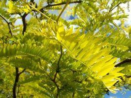 Réaction de plantes à la lumière