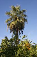 Lois sur l'enlèvement des arbres à Jacksonville, en Floride