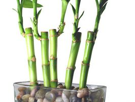 Bamboo Trees argent