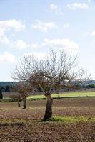 Utilisations d'herbicides européennes