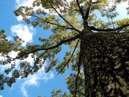 Les meilleurs arbres de chêne dans les paysages