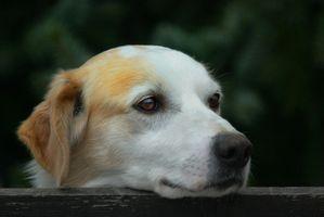 Liste des plantes d'intérieur qui sont toxiques pour les chiens