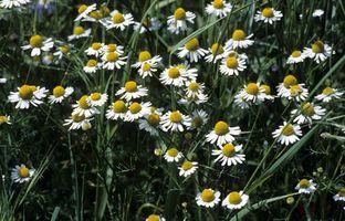 Types de Fleurs allemands