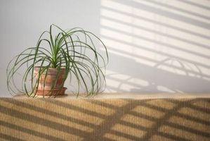 Comment se débarrasser de la moisissure sur la surface du sol des plantes d'intérieur