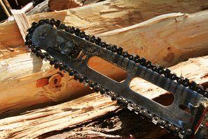 Comment couper du bois dans une forêt du Minnesota