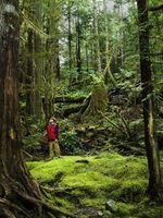 Pourquoi ne pas couper gens des arbres dans la forêt tropicale?