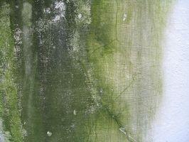 Quelles sont les causes de la moisissure sur les murs?