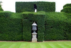 Bonnes plantes pour Hedges