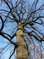 Les meilleurs arbres à la croissance dans une cour avant