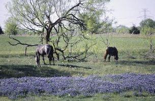 Comment identifier Texas Fleurs