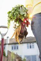 Comment construire un conteneur Cedar pour cultiver des légumes