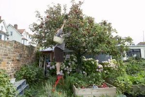 Comment construire un Fraise Bois Chambres