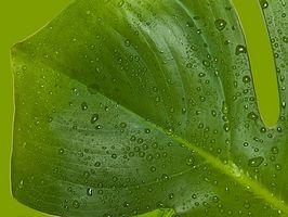 Plantes d'appartement avec une faible humidité