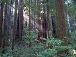 Plantation Instructions pour Redwood